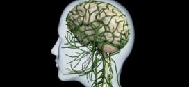 Neurotransmitter-Synapse