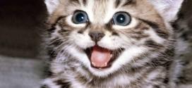 özgürlükçü-kedi-hareketi_46847