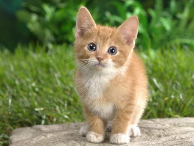 kedi11