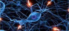 İnsan Beyin Hücreleri Fare Hafızasını Güçlendiriyor