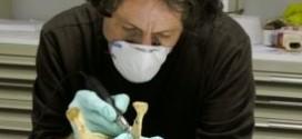 Neandertaller, Avrupa'dan Düşünülenden de Önce Yok Oldular.