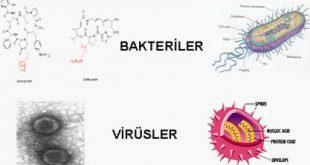 bakteri1